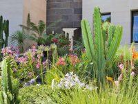 plantes en décoration de jardin